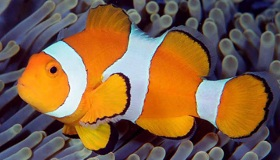 Clownfish-For-Skype